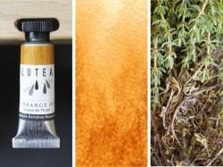 Lutea Plant-Watercolor Light Brown